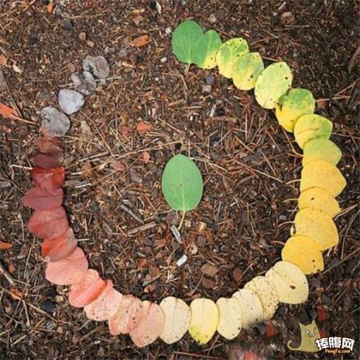 用叶子来诠释生命的循环 图片_hao123网址导