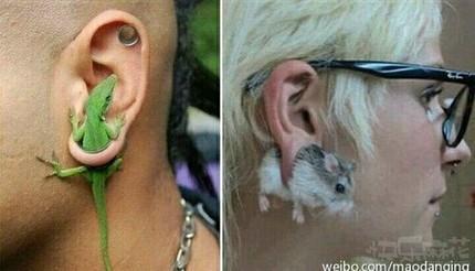 这耳钉太有创意了