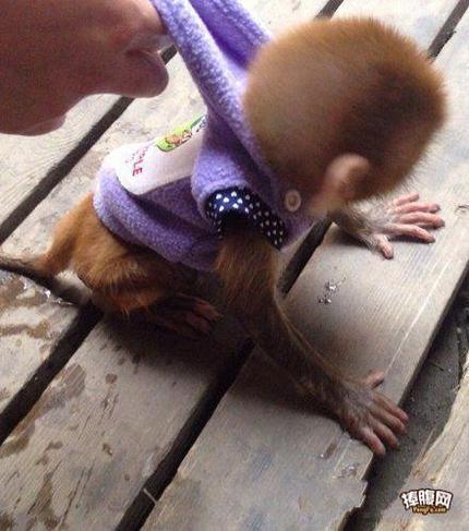 妖猴儿哪里逃?