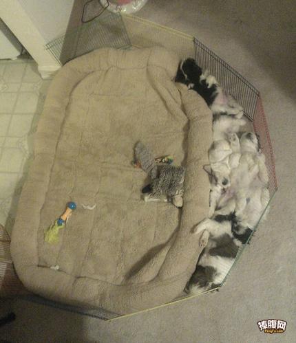 好好的床不躺